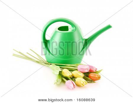 Bailer with flower isolated on white