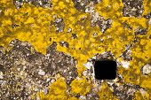 picture of septic  - Square concrete manhole cover with scraps of yellow paint - JPG