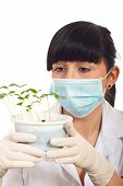 Scientist Female With New Plants