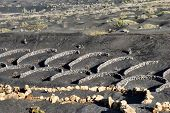 stock photo of semi-arid  - Scenic view of vines growing on volcanic landscape of La Geria Lanzarote Canary Islands Spain - JPG