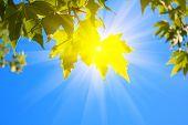 Постер, плакат: зеленые листья и солнца на фоне неба