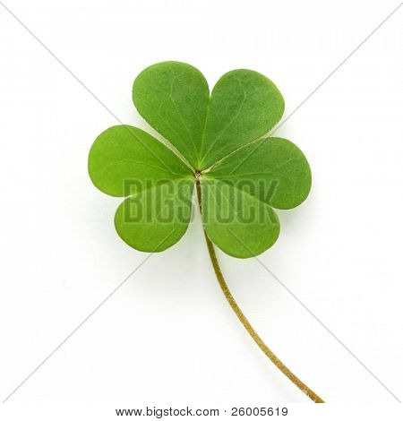 Shamrock,three leaf clover