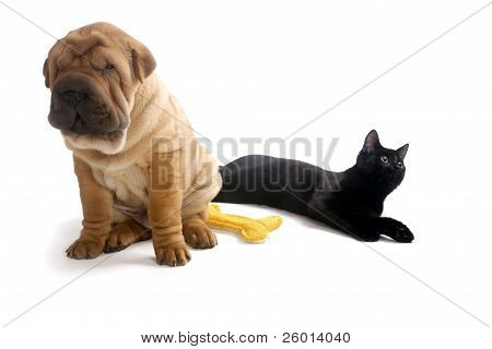 Sharpei puppy and Cat