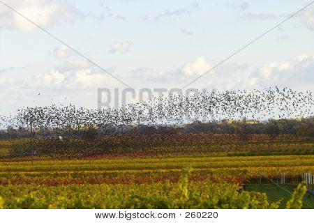 Vögel fliegen Süd