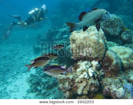 Divers reef