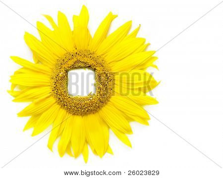 Window is sunflower