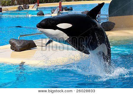 Kill Whale