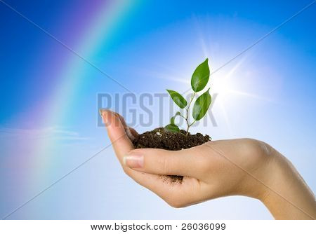 Hand with a plant on a background of the blue sky and a rainbow