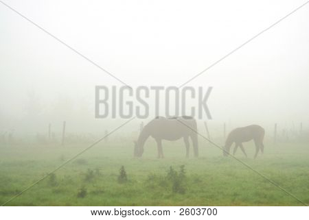 Horses Grazing In A Foggy Landscape