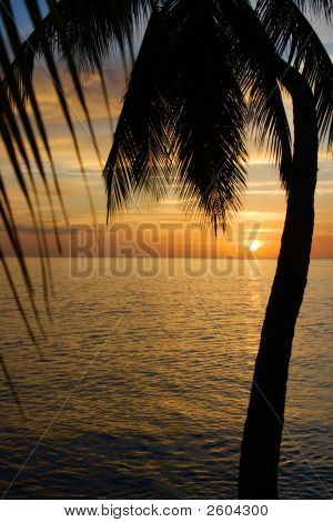 Tropical Sundown