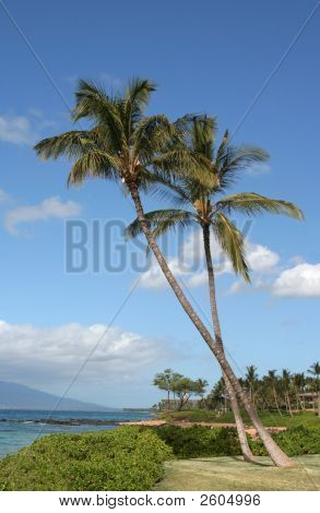 Two Palm Trees With Sky And Ocean
