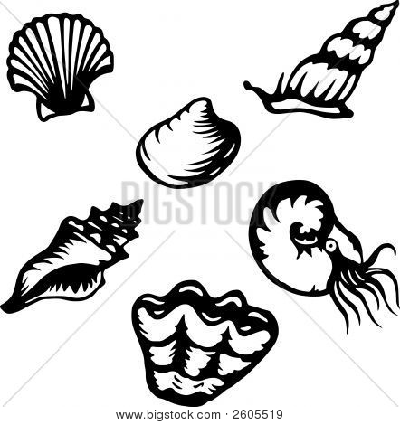 Shells_And_Shelled_Creatures