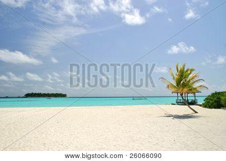 Strand mit weißem Sand, einsame Palm und Turquise Ozean