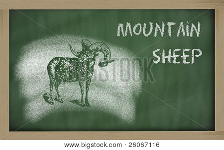 Sketch Of Argali On Blackboard (ovis Ammon)