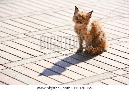 Sick and poor kitten