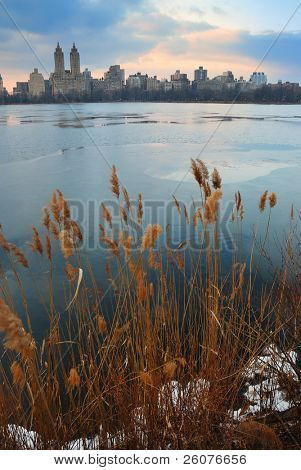 Central Park at dusk with weeds and ice, New York City
