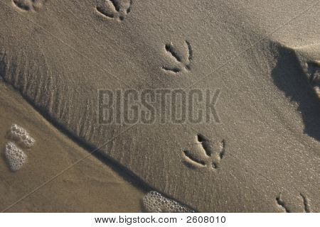 Birdprints