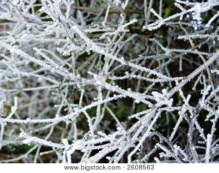 Winter Frost On Tree