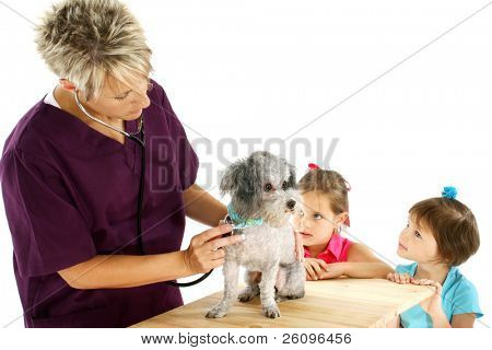 Woman veterinarian giving poodle a check-up while curious children look on