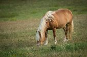 Horse Eating In Meadow. Horse Walking In Field. Horse On Nature. Portrait Of A Horse, Brown Horse. H poster