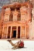 image of petra jordan  - Camel in front of The Treasury in Petra - JPG