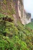 picture of canaima  - The steep rock wall of Monte Roraima in Venezuela - JPG