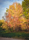 Autumn Landscape -forest With Autumn Golden Tree At The Bank. Autumn Colorful Forest Nature - Sunset poster