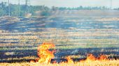 Dry Grass Burning In The Forest. Field With Burning Dry Grass, Fire. poster