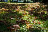 Dry And Brown Leaves Of Autumn On The Green Grass With Sunrays poster