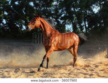 Horse kicking up dust