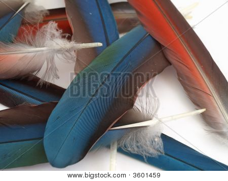 Loose Macaw Feathers