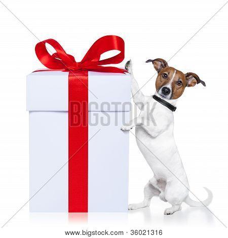 Navidad perro presente