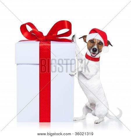 Navidad perro Santa