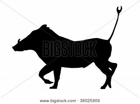 Isolated Silhouette Warthog Running