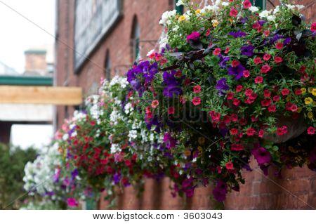 Einhängekörbe Blumen