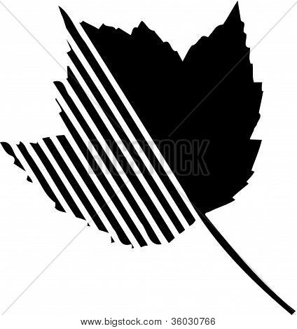 A Maple Leaf With More Stripes On Left Side