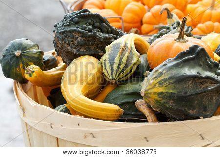 Colorful textured gourds fill bushel basket
