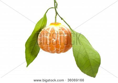 In Leafy Peeled Tangerine