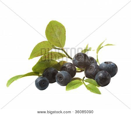 Blueberries And Leaves
