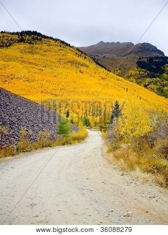 Pathway To Colorado Hillside Ablaze With Yellow Aspen