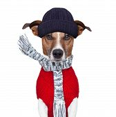 pic of freezing temperatures  - winter dog with ascarf and hat wool - JPG