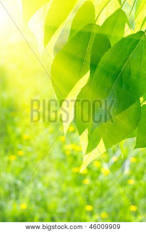 Poplar leaves on spring floral background