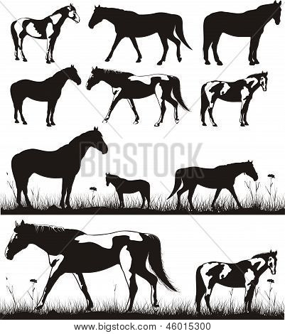 horses - silhouettes