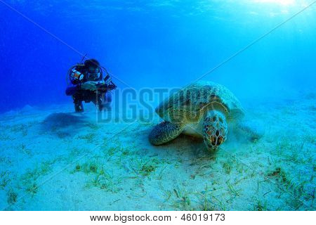 Marine Life in the Red Sea with turtle