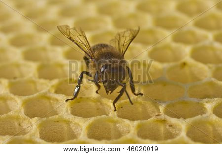 Bee Build Honeycombs