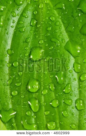 Green Leafs #7