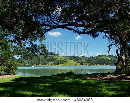 Tree-framed water view