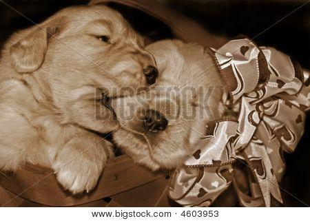 Sepia Pups