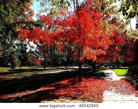 Outono em chamas