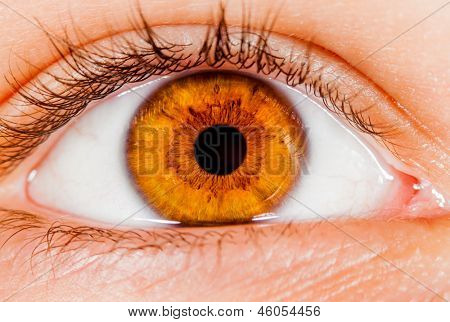Photo Human eye close-up.
